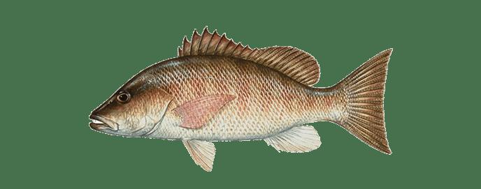 Miami-grey-snapper-fishing