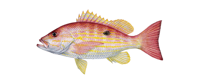 Miami-lane-snapper-fishing