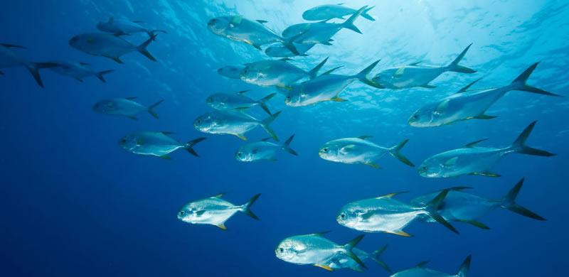 permit-fishing-charter-in-Miami